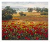 Italian Poppy Vista I