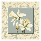 Daffodils With Scroll