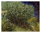 Lilac Bush  1889