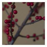 Red Berries II