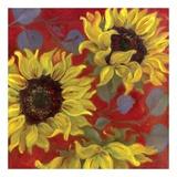 Sunflower II
