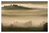 Trees in Mist II