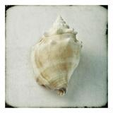 Ocean Jewel I
