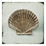 Ocean Jewel VI