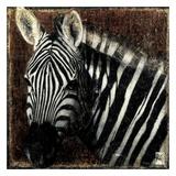 Portrait de Zebre