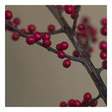 Red Berries I