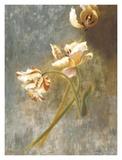 Tulip Rhythms