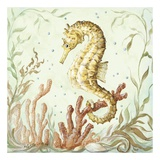 Atlantic Seahorse