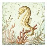 Atlantic Seahorse