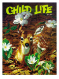 Fawn in Spring Time - Child Life  May 1972
