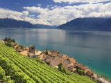 Switzerland  Vaud  Lavaux Vineyards  St; Saphorin Village and Lac Leman / Lake Geneva