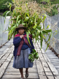 Peru  a Woman with a Load of Maize Stalks to Feed to Her Pigs Crosses the Urubamba River