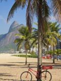 Brazil  Rio De Janeiro  Leblon Beach  Bike Leaning on Palm Tree