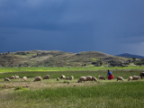 Peru  a Woman Looks after Her Sheep Along the Shores of Lake Titicaca as Rain Threatens
