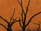 Dead Trees in Dry Clay Pan  Dead Vlei  Soussusvlei  Namibia  Africa