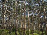 Australia  Western Australia  Leeuwin-Naturaliste National Park  Boranup