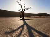 Dead Trees in Dried Clay Pan  Namib Naukluft National Park  Namibia