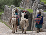 Peru  Native Indian Women Lead their Llamas Past the Ruins of Saqsaywaman