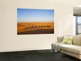 Tunisia  Ksour Area  Ksar Ghilane  Grand Erg Oriental Desert  Camel Caravan