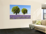 Two Trees in a Lavender Field  Provence  France
