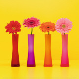 Four Flowers and Yellow Background