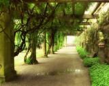 Opulent Garden I