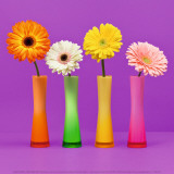 Four Flowers and Pink Background