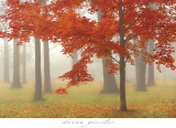 Autumn Mist II