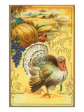 Thanksgiving Greeting  Turkey and Pumpkin