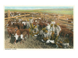 Cowboys Branding Calves in Corral