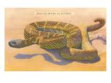 Seven-Foot Rattler  Ole Southwest