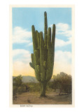 World&#39;s Largest Saguaro Cactus