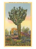 Watermelon Tree  Freak Saguaro Cactus