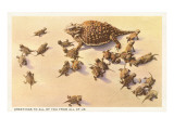 Horny Toad Family