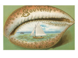 Souvenir Cowrie Shell with Sailboat