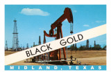 Black Gold  Midland  Texas