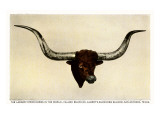 Texas Longhorn Steer Trophy Head