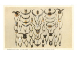 Collection of Unmounted African Game Horns