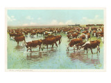 Cattle Watering on the Range