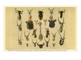 Collection of African Trophy Heads