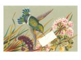 Victorian Hummingbird