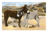 Burros Snuggling  Romance in the Rockies