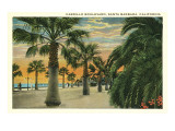 Palm Trees on Cabrillo Boulevard  Santa Barbara  California