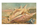 Conch Shell  Greetings from Coronado  California