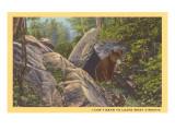 Bear Cub on Rocks  West Virginia