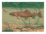 Woodcut of Rainbow Trout