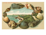 Sea Shells  Cliff Walk  Newport  Rhode Island