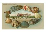Sea Shells  Hotel del Coronado  San Diego  California
