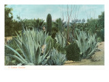 Cactus Garden with Agave