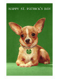 Chihuahua with Shamrock Collar